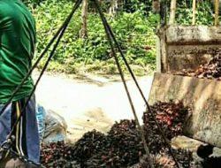 Harga CPO Turun 2% di Susul Minyak Mentah Global Melemah Diposisi 0,6%